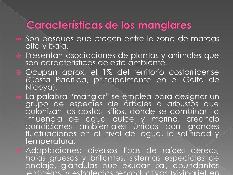 Características de los manglares