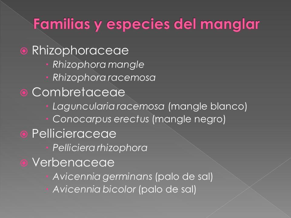 Familias y especies del manglar