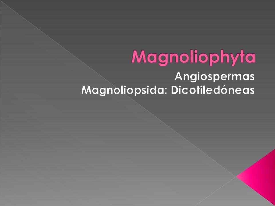 Angiospermas Magnoliopsida: Dicotiledóneas