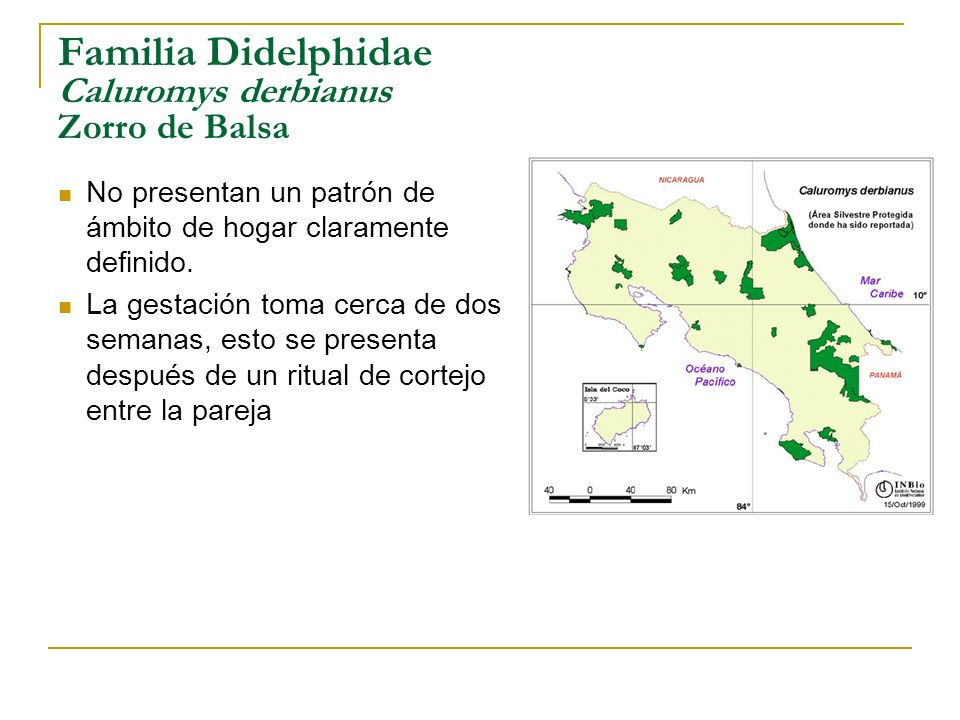 Familia Didelphidae Caluromys derbianus Zorro de Balsa