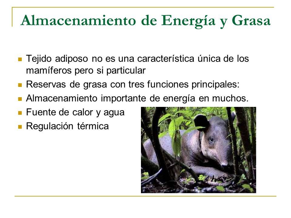 Almacenamiento de Energía y Grasa