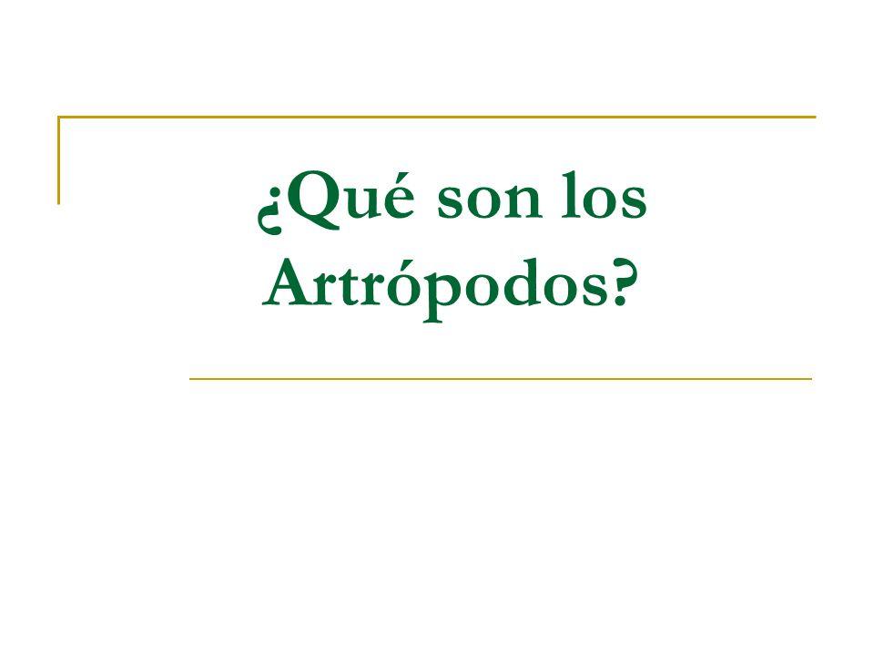 ¿Qué son los Artrópodos