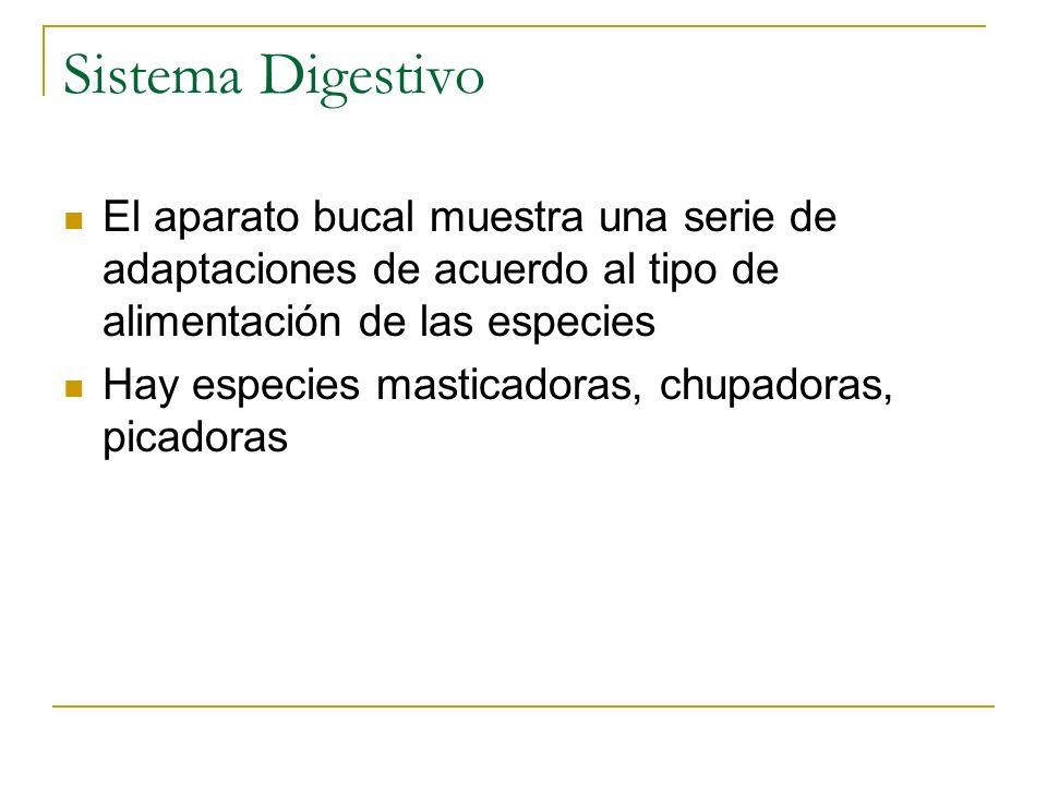 Sistema Digestivo El aparato bucal muestra una serie de adaptaciones de acuerdo al tipo de alimentación de las especies.