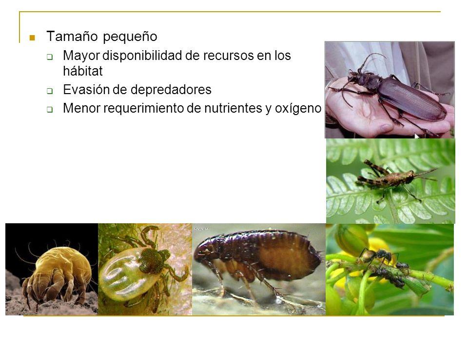 Tamaño pequeño Mayor disponibilidad de recursos en los hábitat