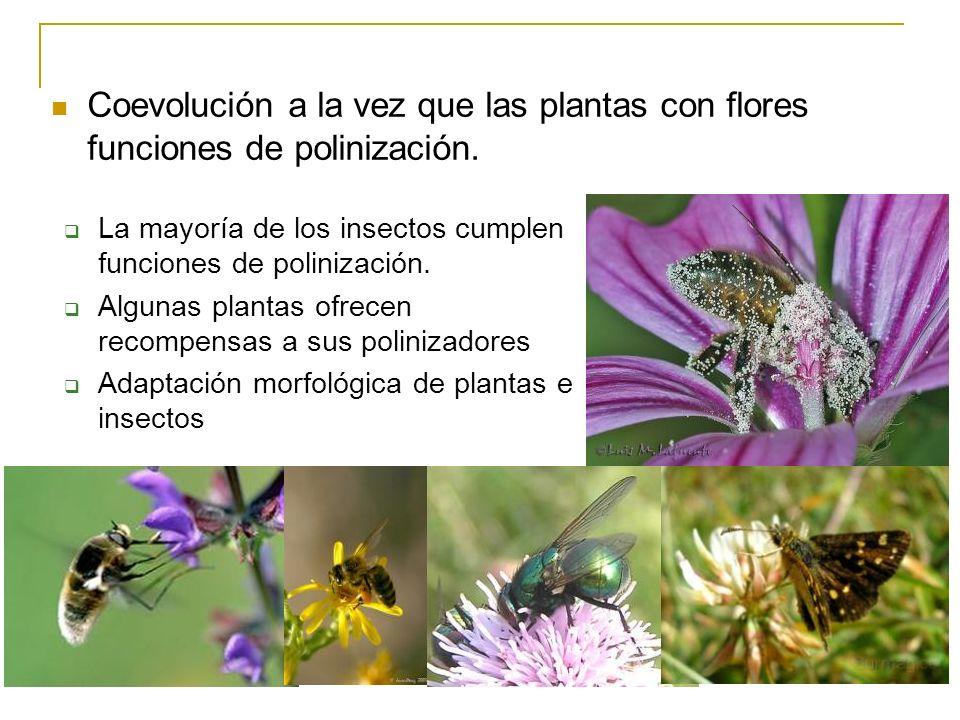Coevolución a la vez que las plantas con flores funciones de polinización.