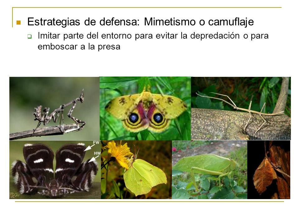 Estrategias de defensa: Mimetismo o camuflaje