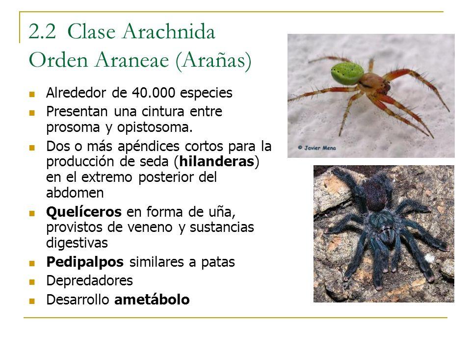 2.2 Clase Arachnida Orden Araneae (Arañas)