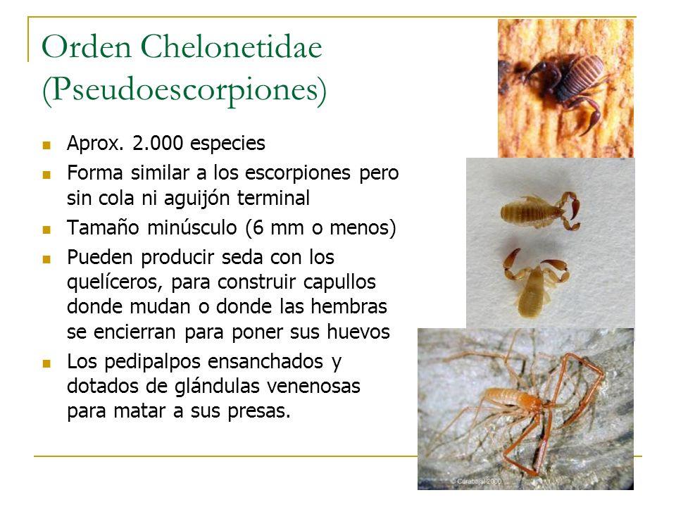 Orden Chelonetidae (Pseudoescorpiones)