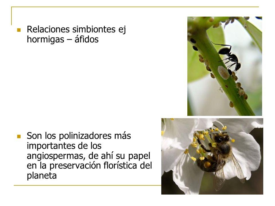 Relaciones simbiontes ej hormigas – áfidos