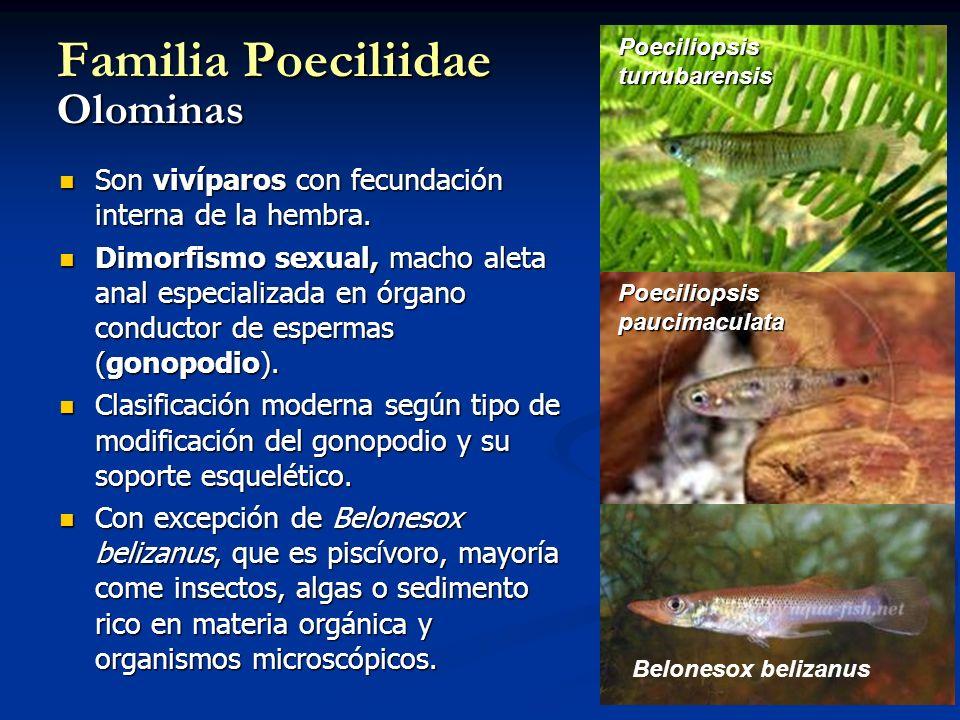 Familia Poeciliidae Olominas