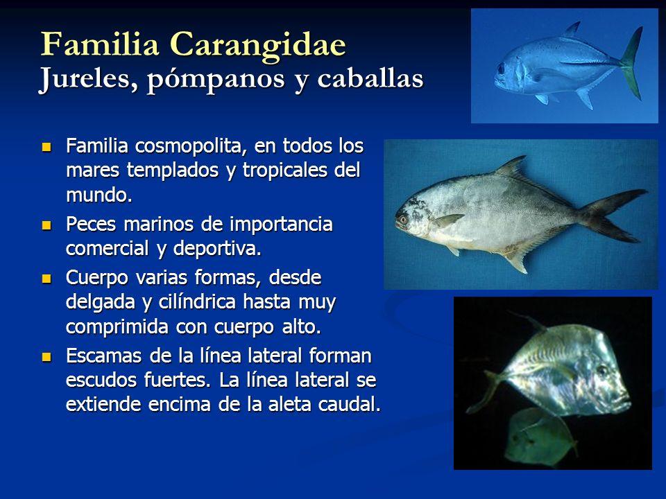 Familia Carangidae Jureles, pómpanos y caballas
