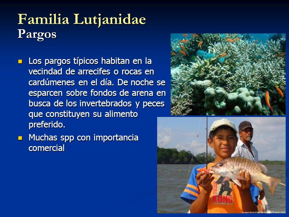 Familia Lutjanidae Pargos