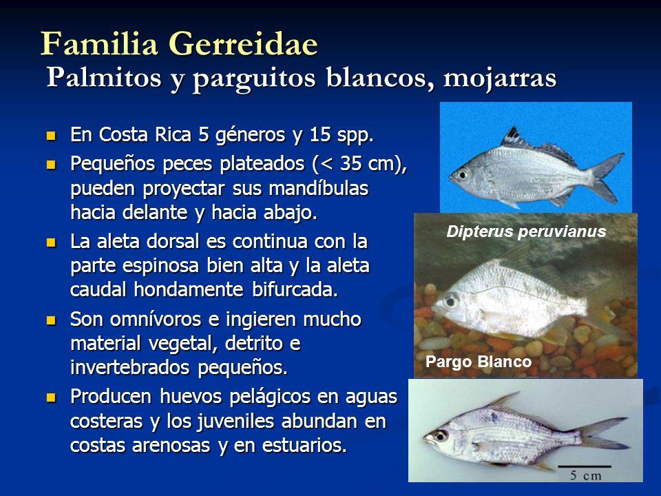 Familia Gerreidae Palmitos y parguitos blancos, mojarras