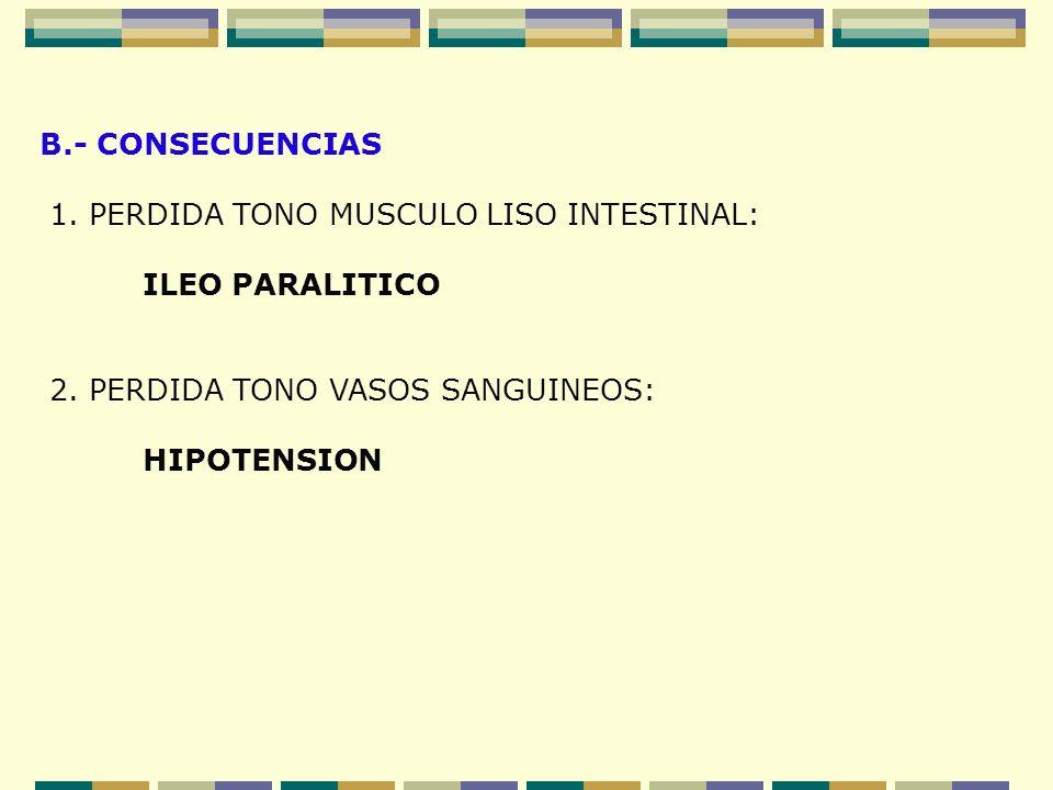 B.- CONSECUENCIAS 1. PERDIDA TONO MUSCULO LISO INTESTINAL: ILEO PARALITICO. 2. PERDIDA TONO VASOS SANGUINEOS:
