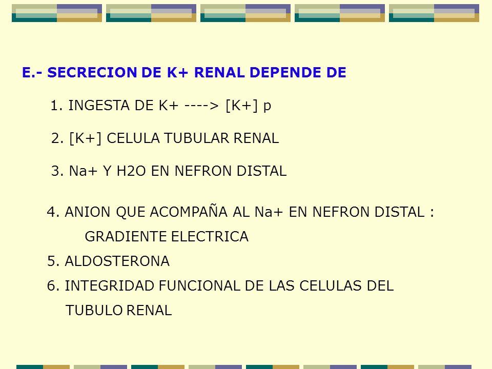 E.- SECRECION DE K+ RENAL DEPENDE DE