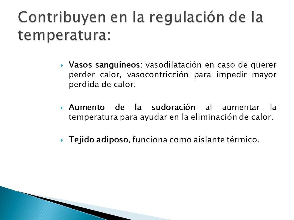 Contribuyen en la regulación de la temperatura: