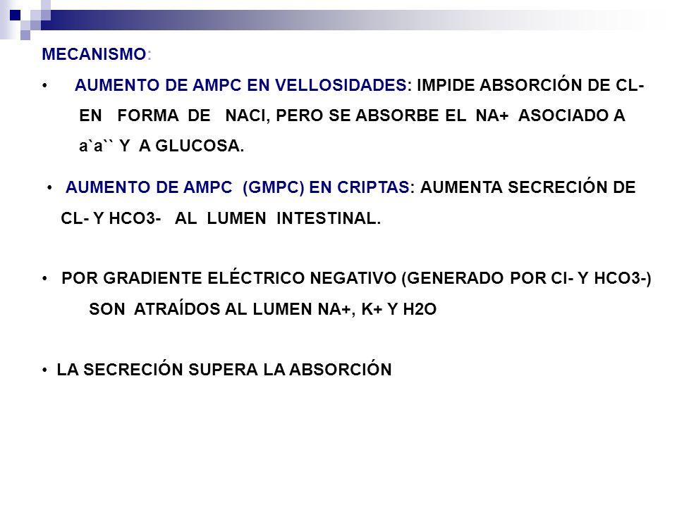 MECANISMO: AUMENTO DE AMPC EN VELLOSIDADES: IMPIDE ABSORCIÓN DE CL- EN FORMA DE NACl, PERO SE ABSORBE EL NA+ ASOCIADO A.