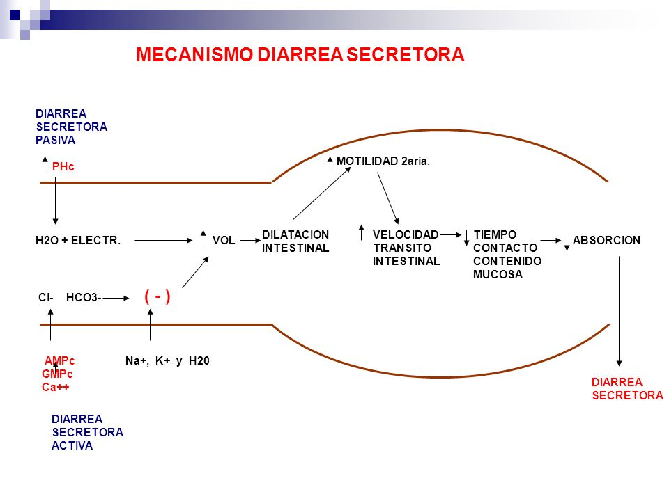 MECANISMO DIARREA SECRETORA