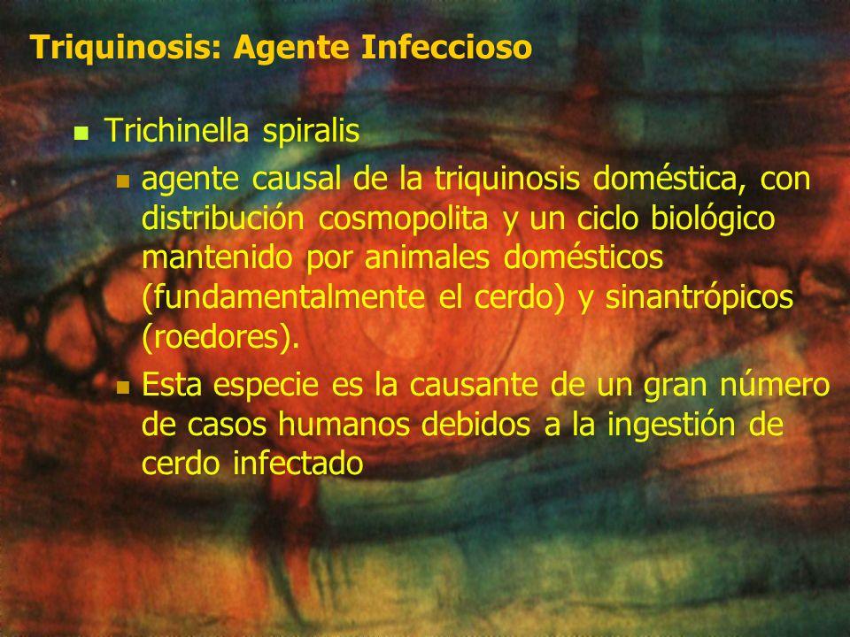 Triquinosis: Agente Infeccioso