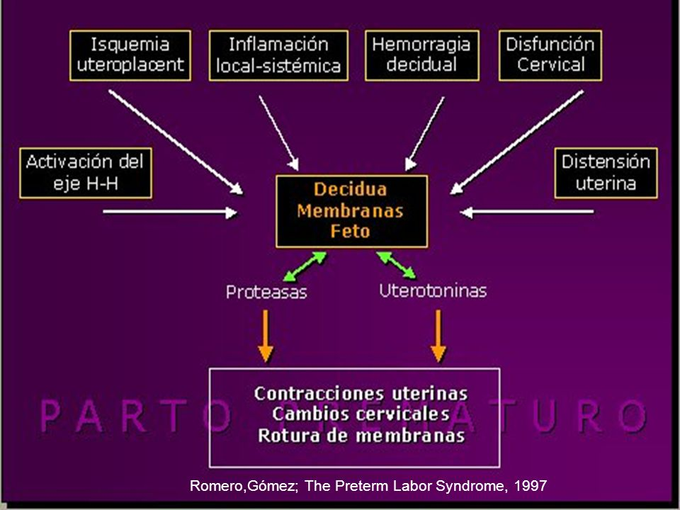 Romero,Gómez; The Preterm Labor Syndrome, 1997
