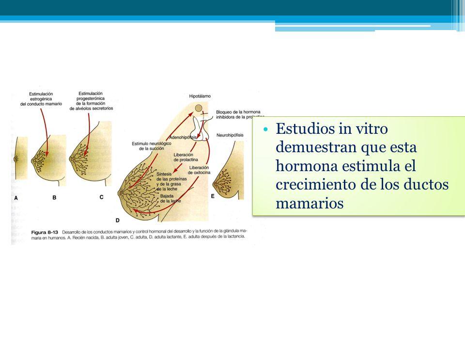 Estudios in vitro demuestran que esta hormona estimula el crecimiento de los ductos mamarios