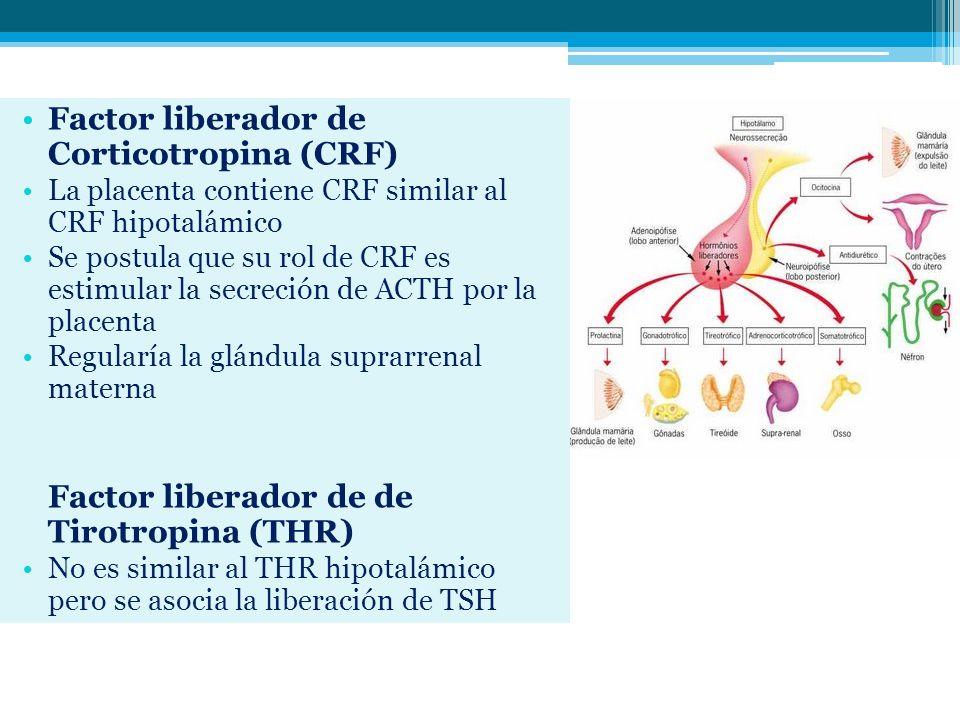 Factor liberador de Corticotropina (CRF)