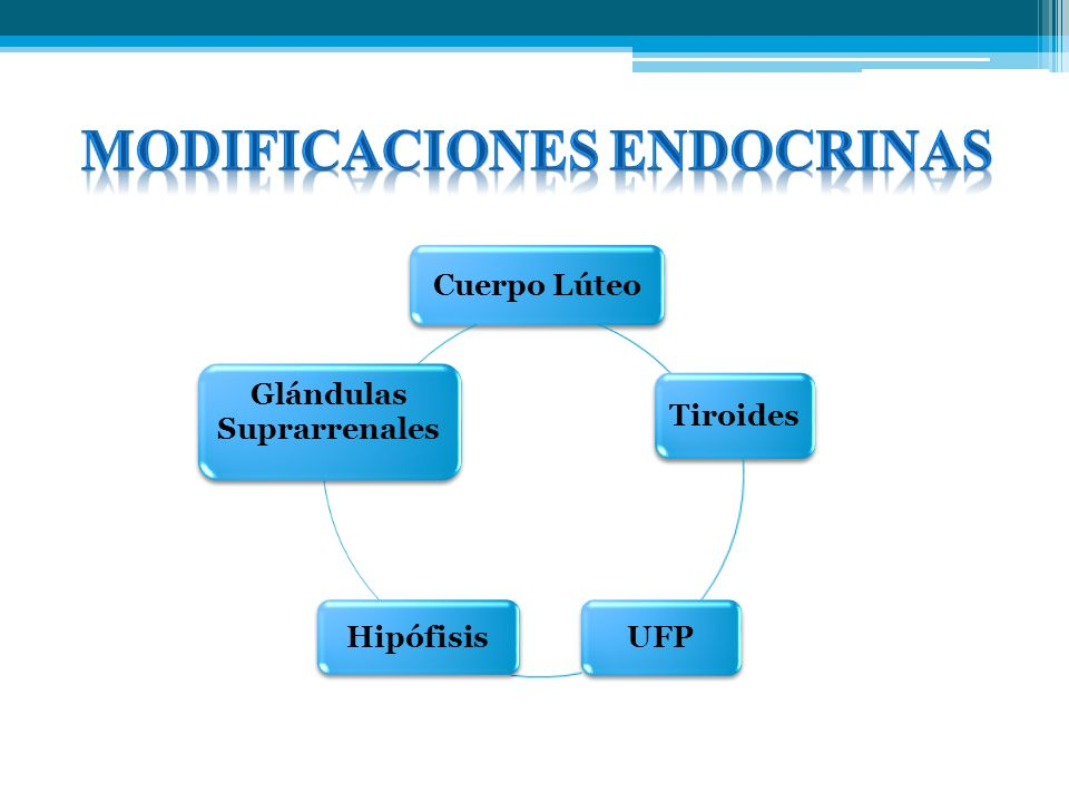 MODIFICACIONES ENDOCRINAS