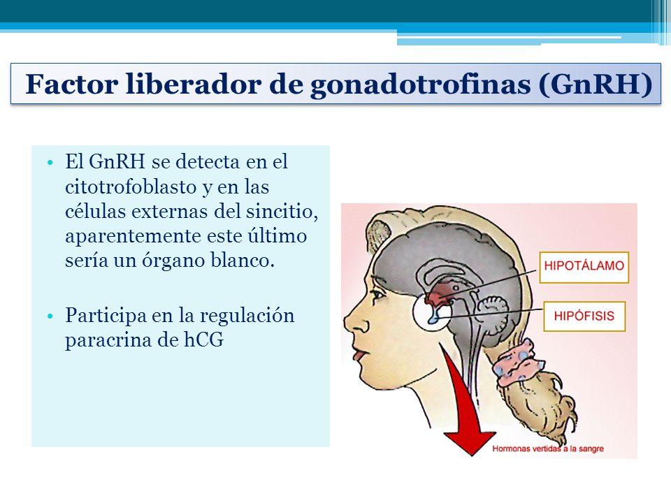 Factor liberador de gonadotrofinas (GnRH)