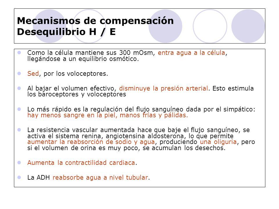 Mecanismos de compensación Desequilibrio H / E
