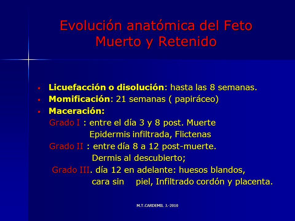 Evolución anatómica del Feto Muerto y Retenido