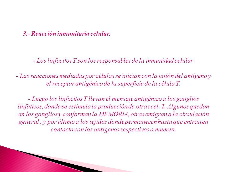 3.- Reacción inmunitaria celular.