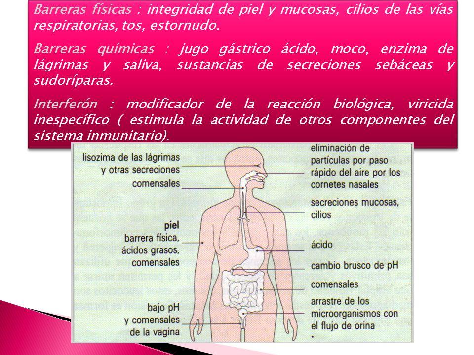 Barreras físicas : integridad de piel y mucosas, cilios de las vías respiratorias, tos, estornudo.
