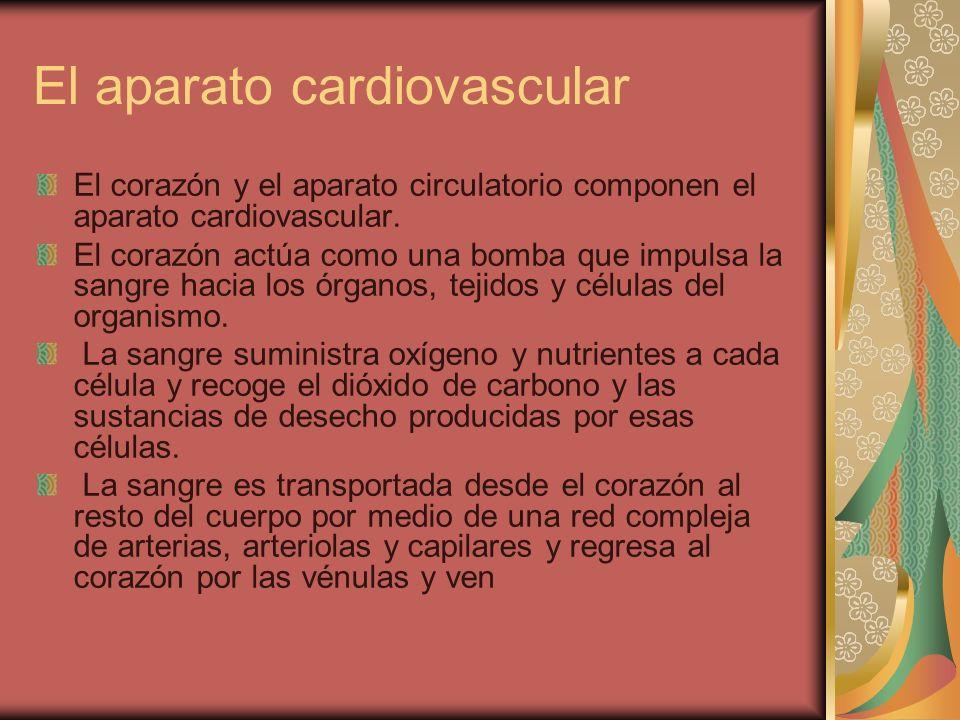 El aparato cardiovascular