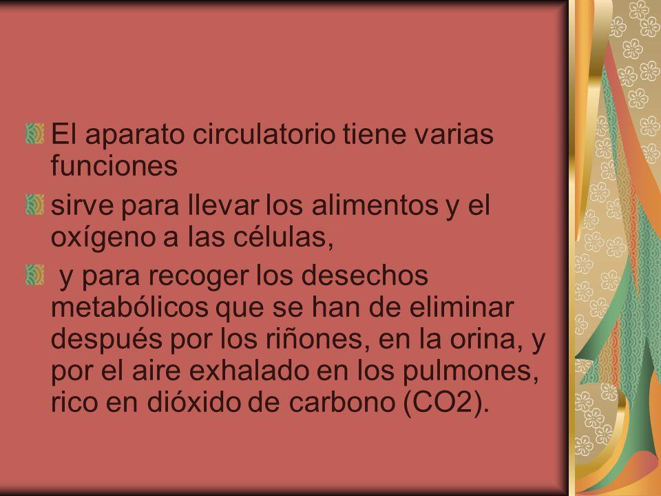 El aparato circulatorio tiene varias funciones