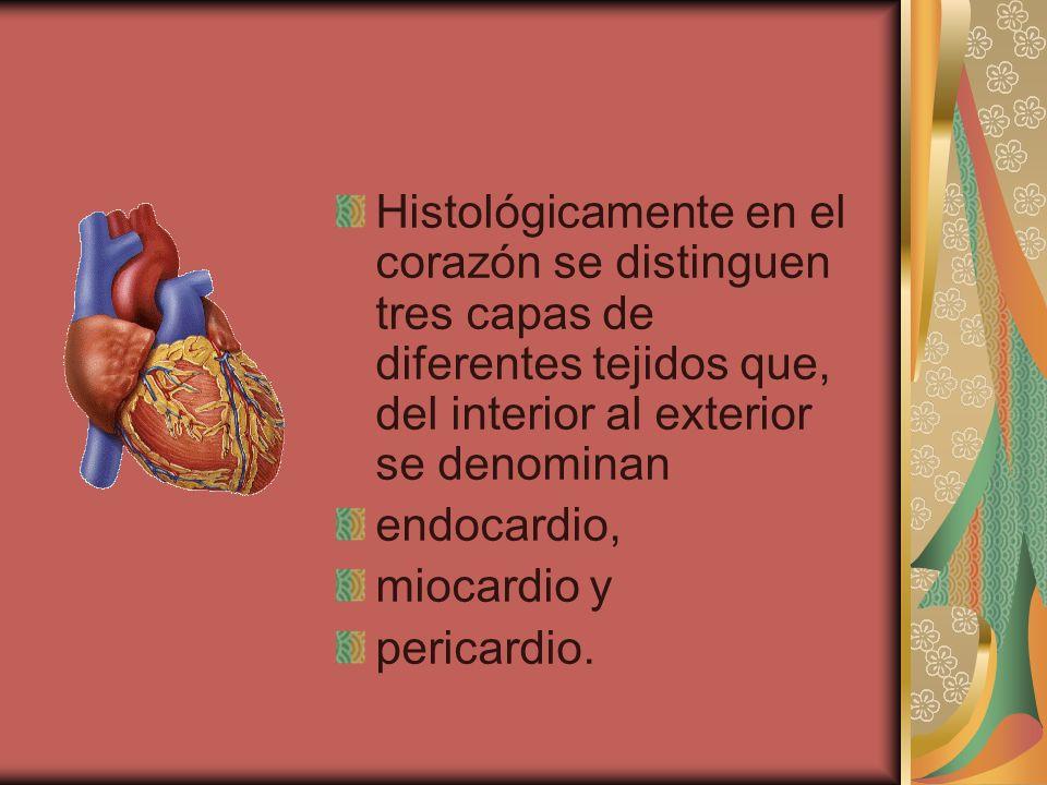 Histológicamente en el corazón se distinguen tres capas de diferentes tejidos que, del interior al exterior se denominan