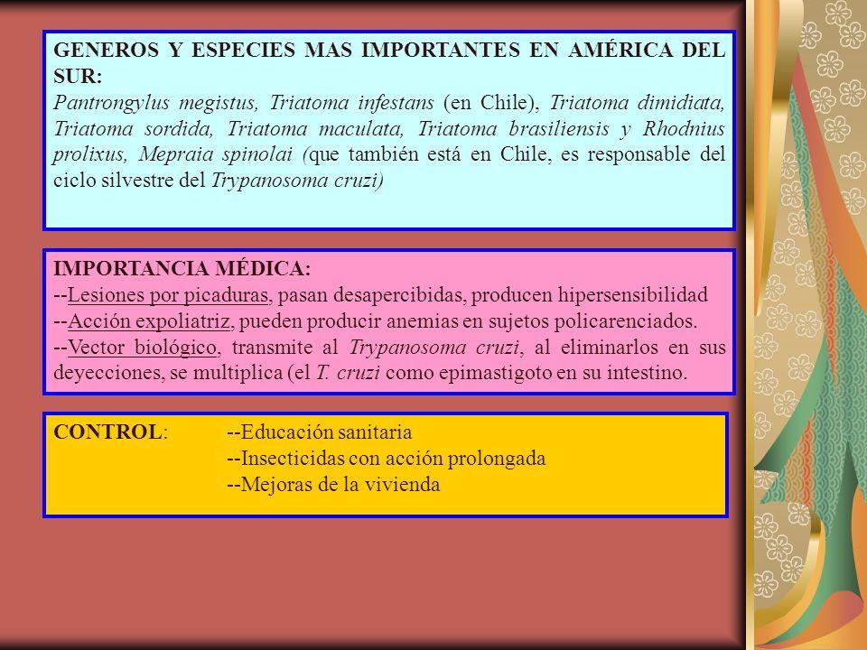 GENEROS Y ESPECIES MAS IMPORTANTES EN AMÉRICA DEL SUR: