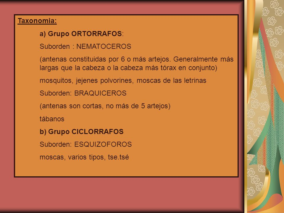 Taxonomia: a) Grupo ORTORRAFOS: Suborden : NEMATOCEROS.