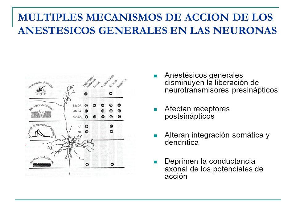 MULTIPLES MECANISMOS DE ACCION DE LOS ANESTESICOS GENERALES EN LAS NEURONAS