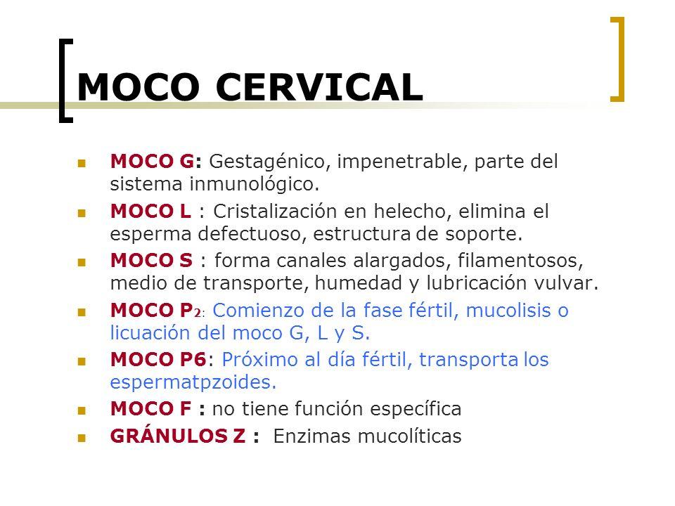 MOCO CERVICAL MOCO G: Gestagénico, impenetrable, parte del sistema inmunológico.