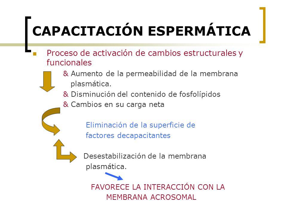 CAPACITACIÓN ESPERMÁTICA
