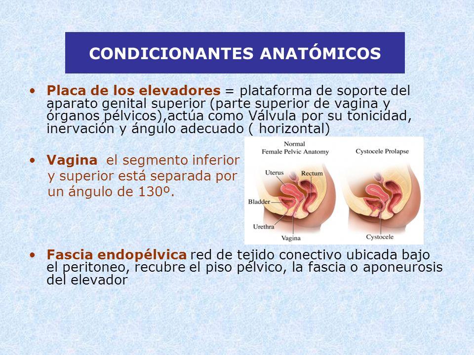 CONDICIONANTES ANATÓMICOS