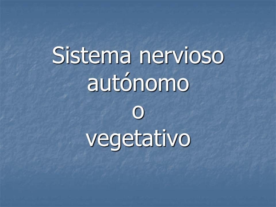Sistema nervioso autónomo o vegetativo