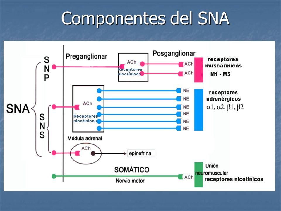 Componentes del SNA Receptores nicotínicos