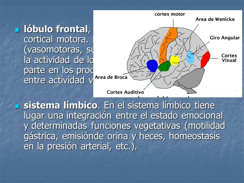 lóbulo frontal, situado por delante de la zona cortical motora