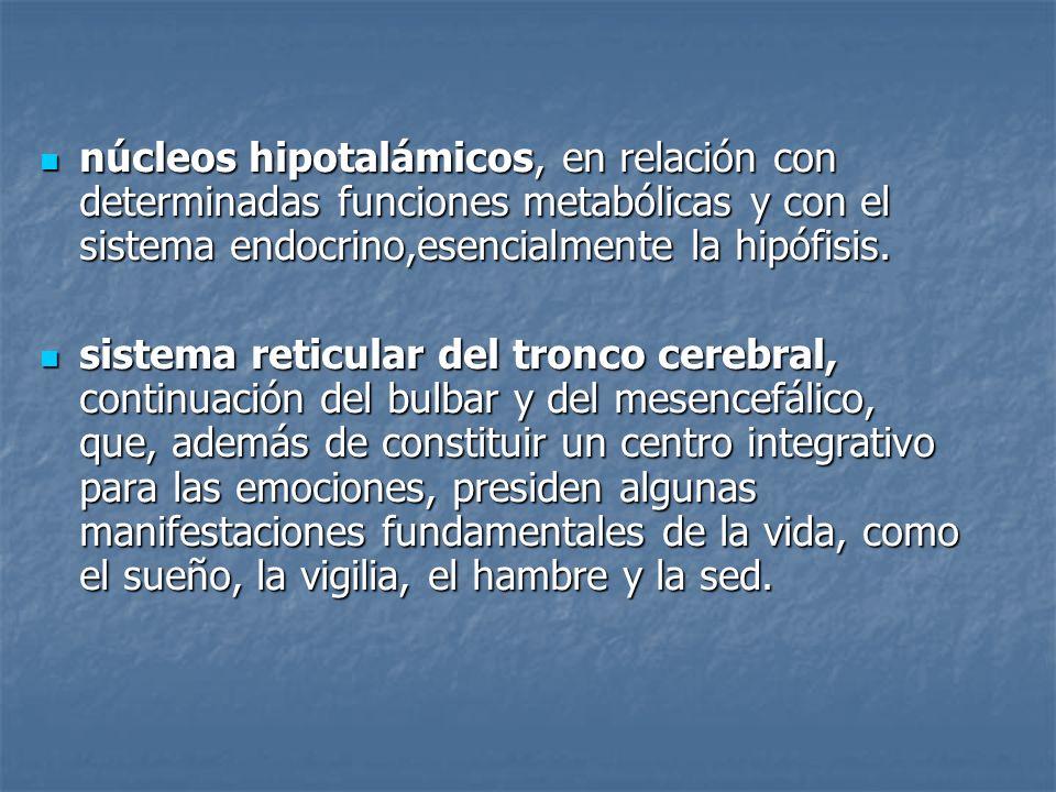 núcleos hipotalámicos, en relación con determinadas funciones metabólicas y con el sistema endocrino,esencialmente la hipófisis.