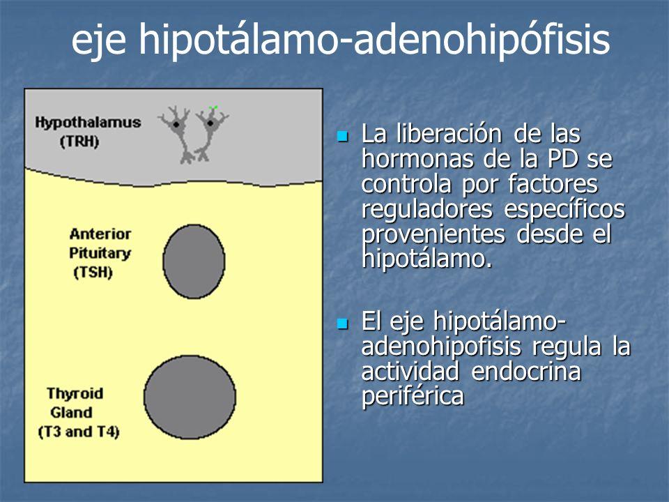 eje hipotálamo-adenohipófisis