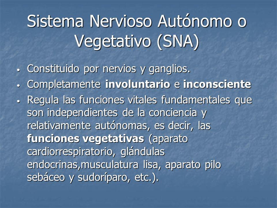 Sistema Nervioso Autónomo o Vegetativo (SNA)