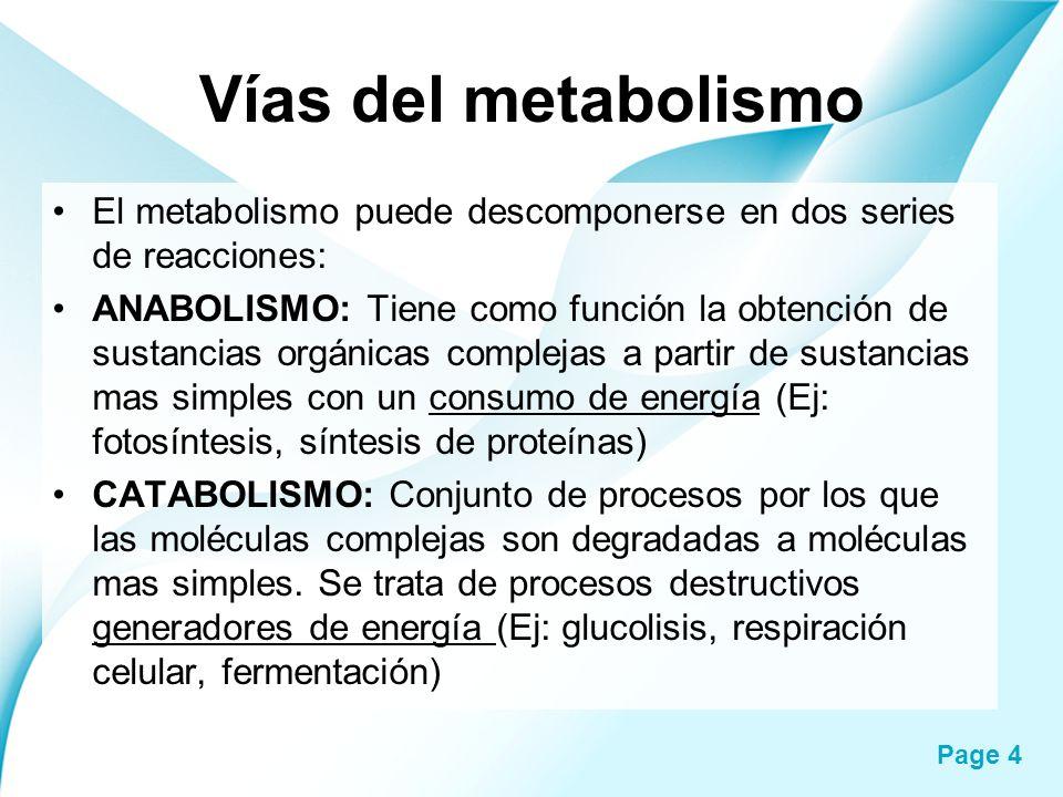 Vías del metabolismo El metabolismo puede descomponerse en dos series de reacciones: