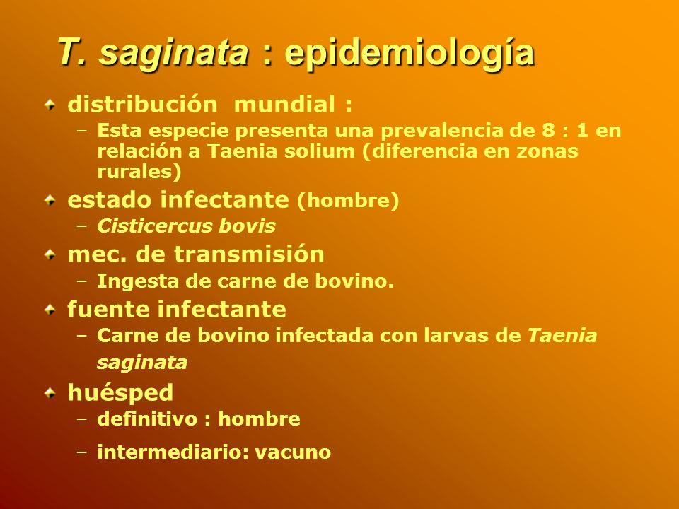 T. saginata : epidemiología