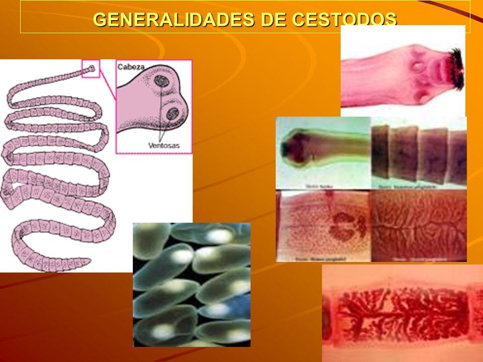 GENERALIDADES DE CESTODOS